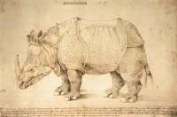 Duerer_Rhino